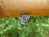 Vackra fjärilar