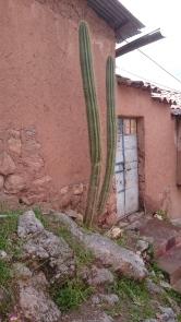 Rejäla kaktusar